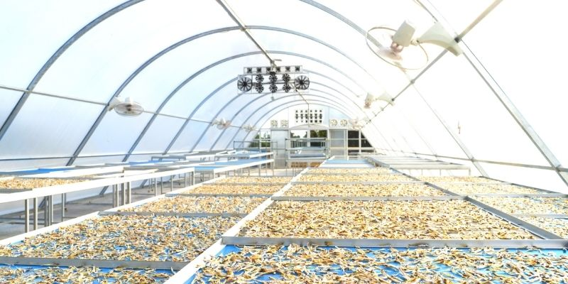 solar dryer for dehydrated foods